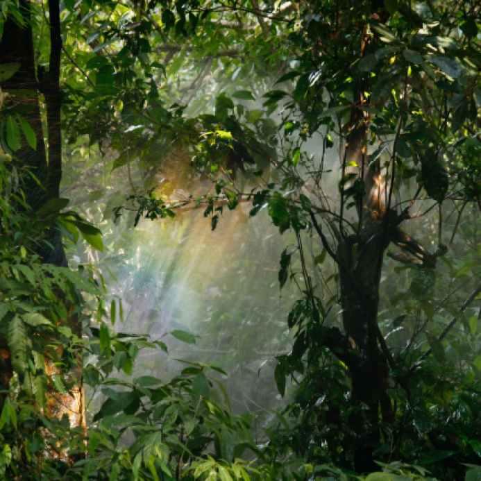background blur botanical branches